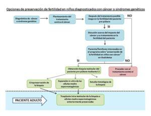 Opciones de preservación-de fertilidad en niños con cáncer